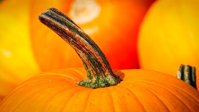 Photo of a pumpkin top with a curvy stem