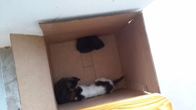 3 Kittens In Box