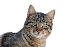El origen de los gatos domésticos