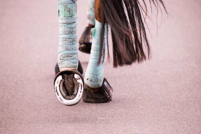 Dlaczego nie umiem jeździć na koniu?