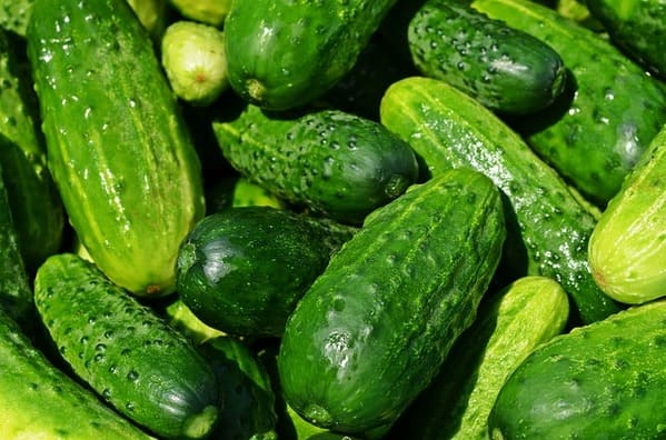 Benefícios de comer o pepino com a casca