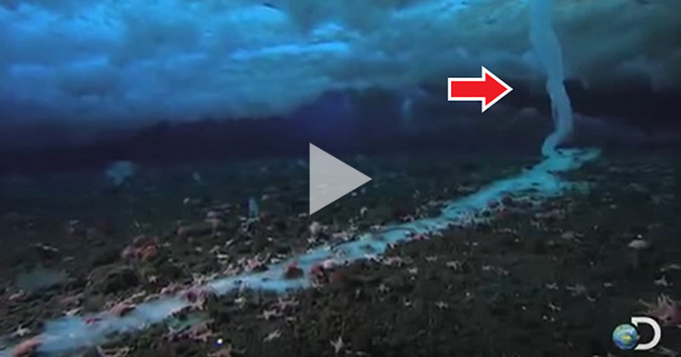Rare footage of deadly tube of ice that forms under the sea, kills everything its touches