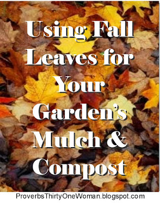 How to Use Autumn Leaves for Mulch and Compost