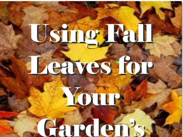 Using Fall Leaves for Garden Mulch & Compost