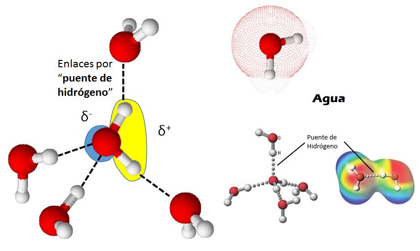 2 0 los niveles de organizaci n subcelulares for Que significa molecula