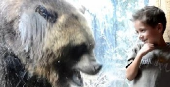 Γιγάντια αρκούδα προσπαθεί να φάει παιδάκι! [video]