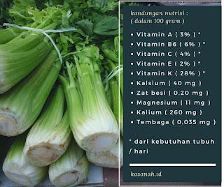Kandungan nutrisi seledri