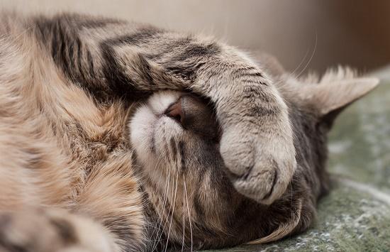 cara mengatasi anak kucing yang sekarat