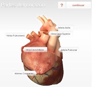 http://www.fundaciondelcorazon.com/images/stories/flash/pf/corazon/360seccion.swf
