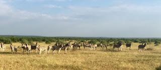 botswana, ratsastusmatka, savanni, riitta reissaa