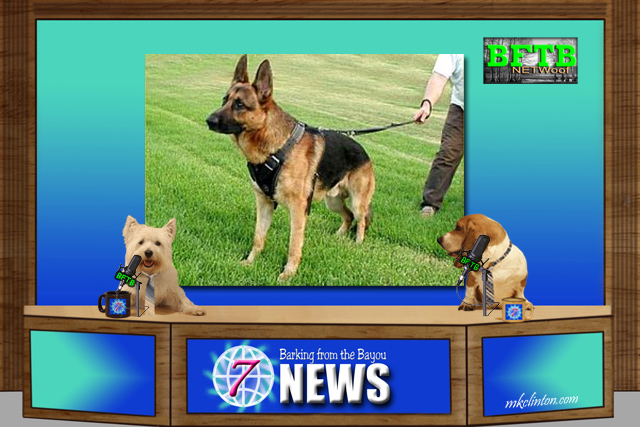 BFTB NETWoof News about guard dog and Hillary Clinton