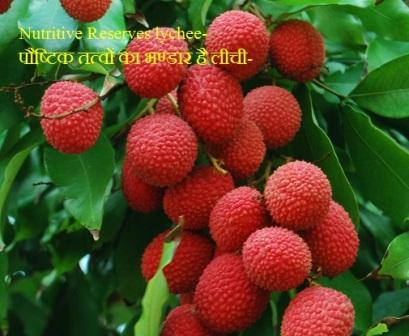 Nutritive Reserves lychee