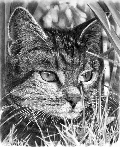 16-Stalking Cat-Franco-Clooney-Francoclun-www-designstack-co