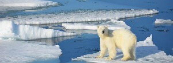 Fakta global warming yang perlu Anda ketahui