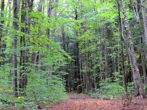 trail through woods