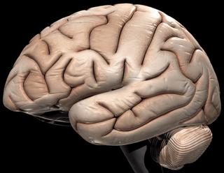 Tubuh Dapat Hidup dalam Waktu Lama Walaupun Otak Telah Mati