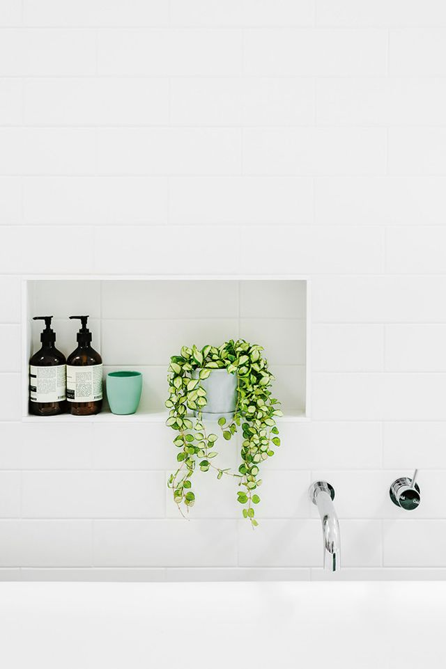 Are Shower Plants the Next Big Design Trend? | Kayla Lynn