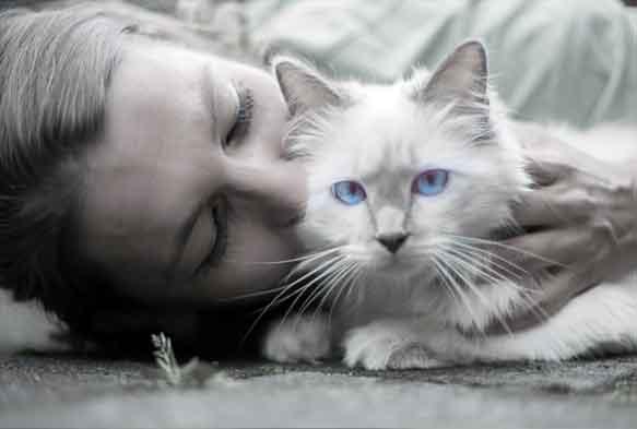 kucing bergetar