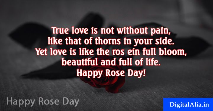 Happy Rose Day Spacial Greeting Cards Photos Wallpaper