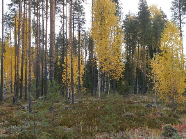 Лес  от  #Пеха в #Мозолово