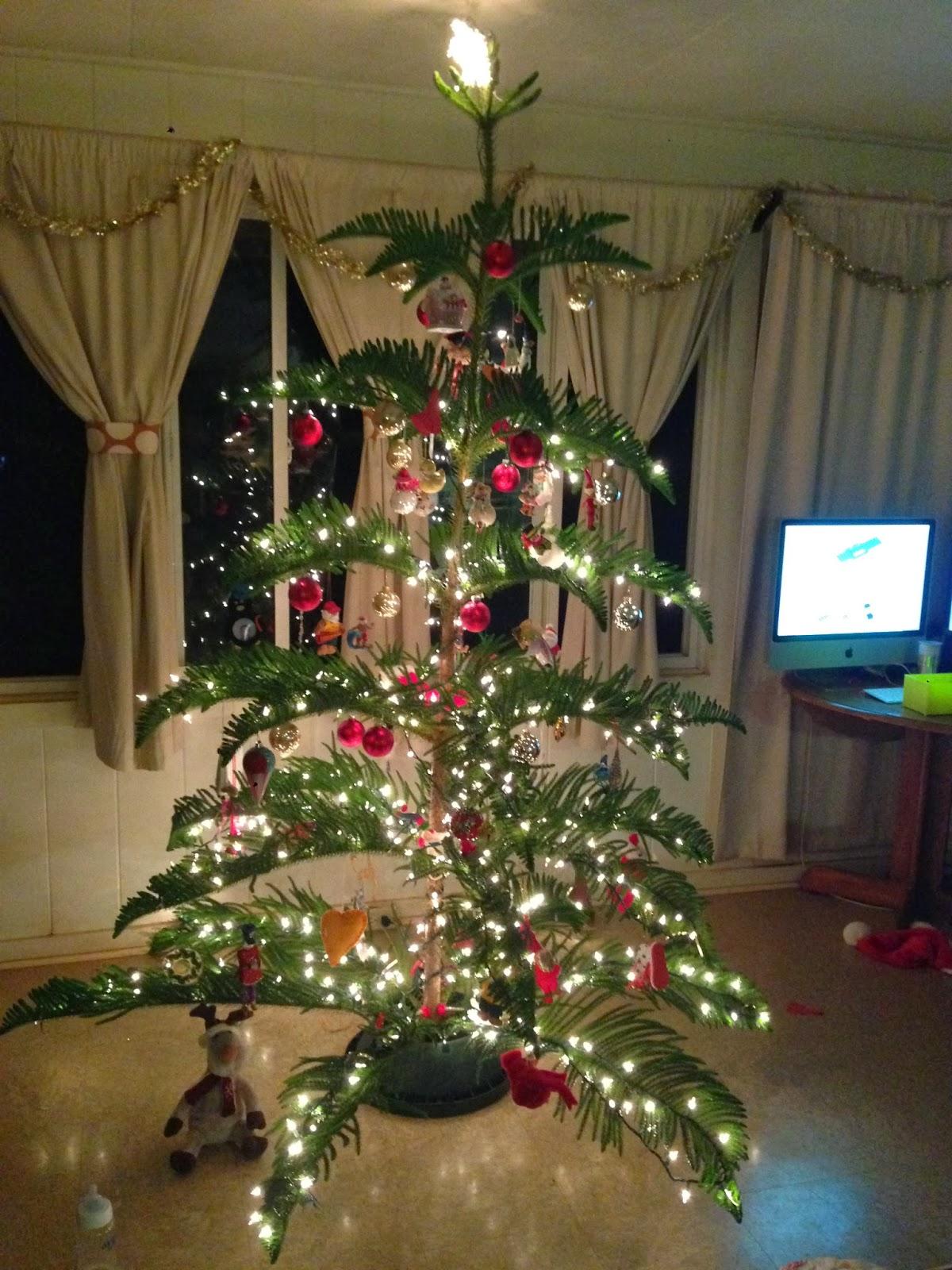 North Shore Notes: Hawaiian Christmas Tree...