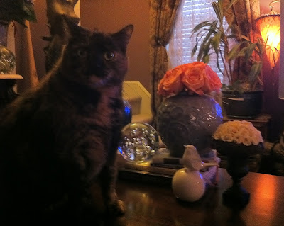 Penelope Cat with Flowers - Stein Your Florist Co.