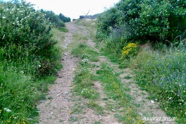 camino y rosas silvestres