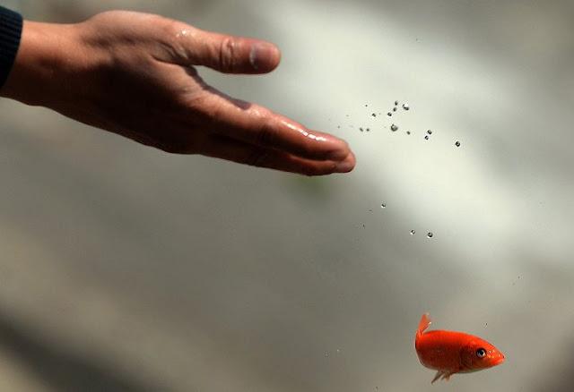 Phóng sinh cá chép ngày Tết ông Công ông Táo là nét đẹp văn hóa của người Việt Nam.