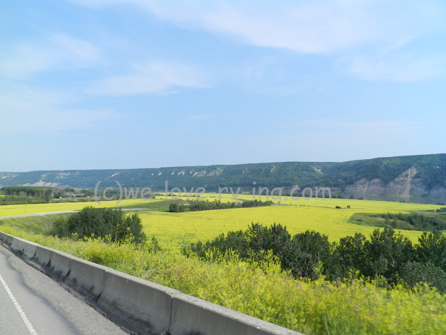 Yellow fields are the canola growing in the Peace River Valley
