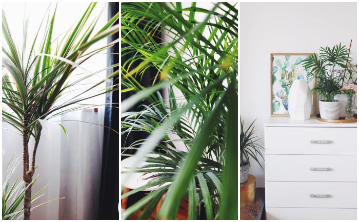 http://www.monikabregula.pl/2018/06/kwiaty-we-wnetrzach-urban-jungle.html