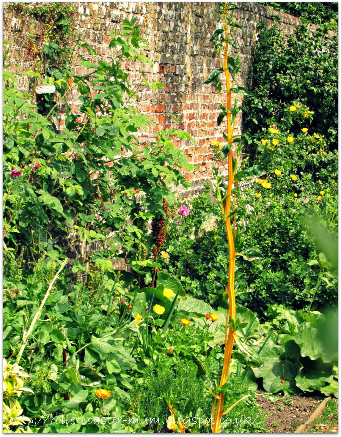 #alphabetphoto, G is for Garden, Petersfield Physic Garden , walled garden