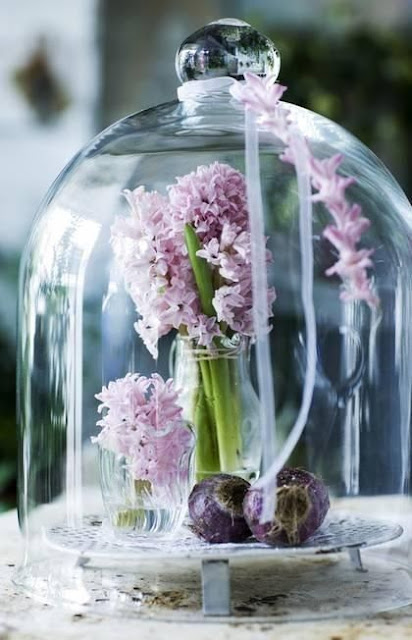 decorating-with-cloches-glass-dome-hyacinth