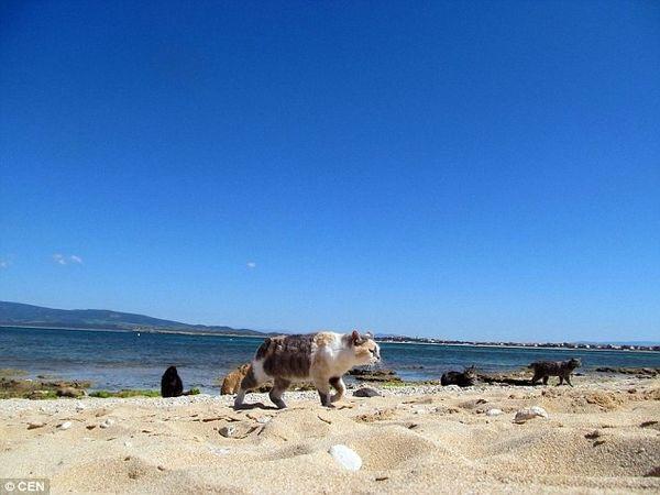 su pallosu sardinia beach