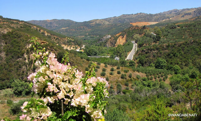 Veduta dal Parco Botanico di Creta