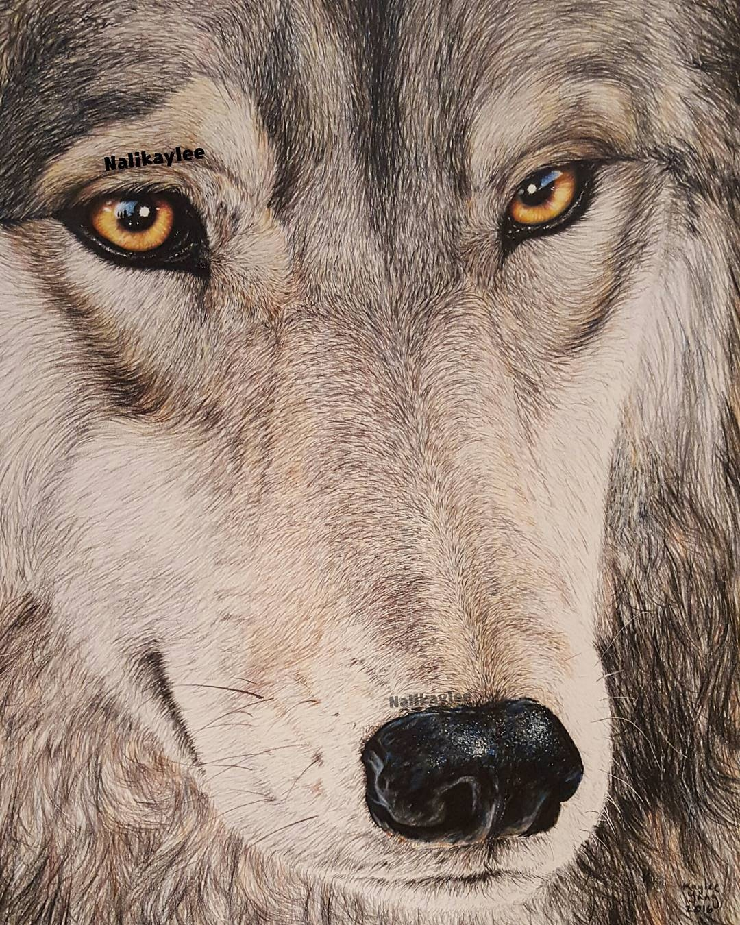 09-Wolf-Kaylee-Yang-nalikaylee-Realistic-Drawings-which-Include-Animals-and-Objects-www-designstack-co