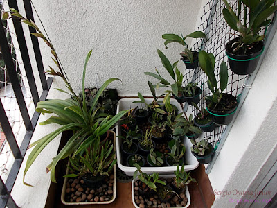 Cultivo de orquídeas em apartamento