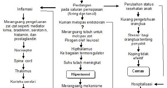Erwin Amaterasu : Laporan Pendahuluan Ispa