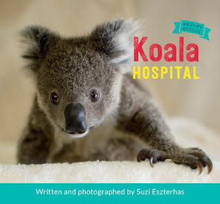 Koala Hospital by Suzi Eszterhas book cover nonfiction