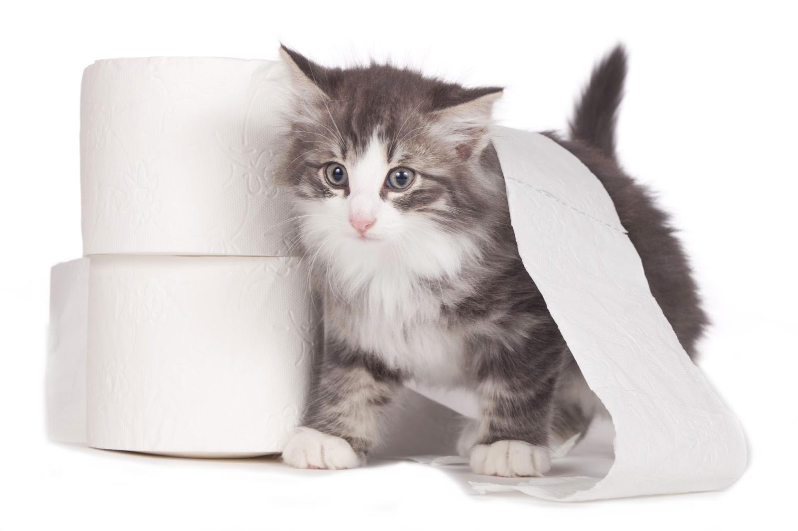 Kristal kedi kumunun zararları