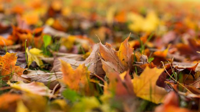 Wallpaper: Autumn 4