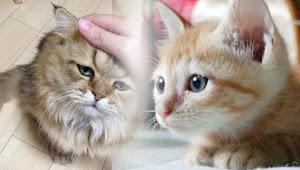 Hukum Membuang Kucing Boleh Apa Tidak ? Karena Terlalu Banyak di Rumah