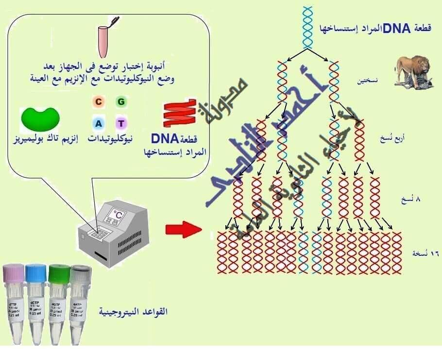 إستنساخ تتابعات dna -إنزيمات القطع أو القصر البكتيرية -  عملية الإستنساخ – طرق الإستنساخ – البلازميد –Taq polymerase -  الفاج - pcr– أحياء الثالث الثانوى