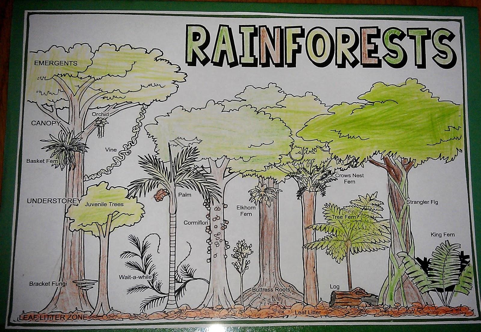 Iman S Home School Rainforest Lapbook And Unit Study