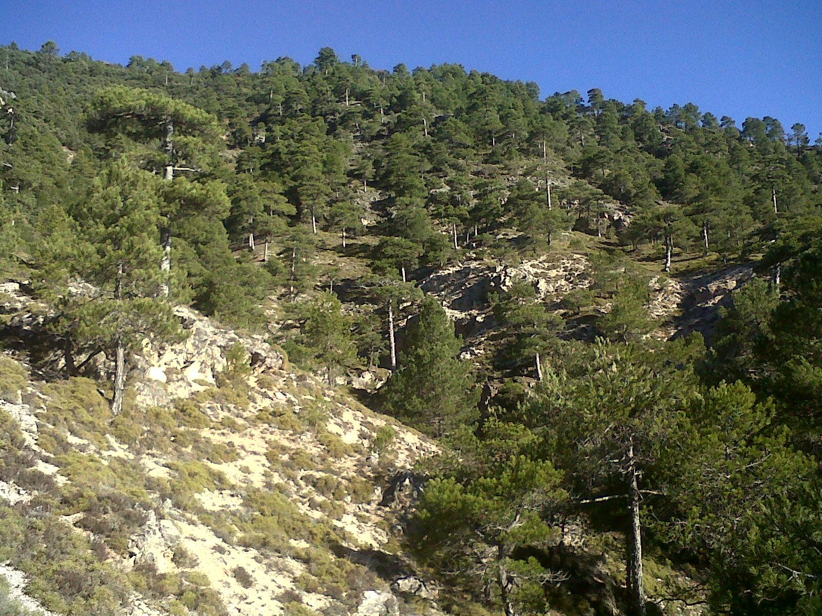 Abuelos Guarros colla el cuervo orcera: 09-12-2012 el borriquillo  buen