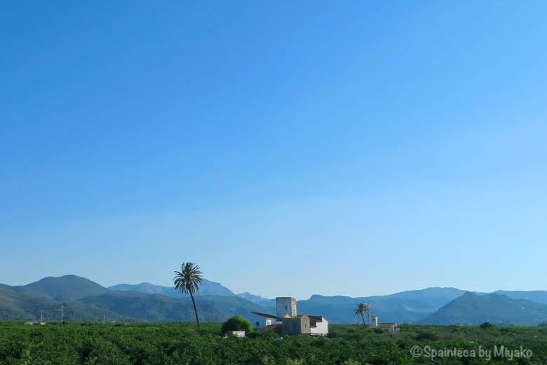スペイン・バレンシア地方のオレンジ農園と青空