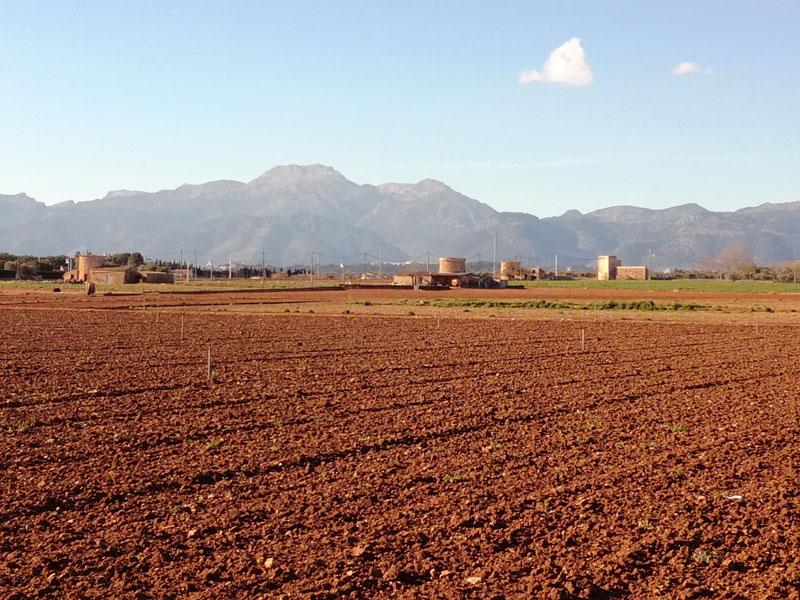 La Sierra de Tramuntana sullo sfondo