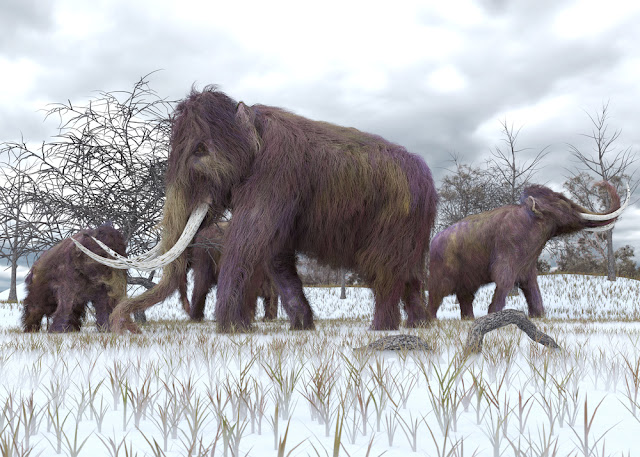 A mammoth task: How do we decide which species to resurrect?