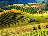 Bikin Mata Melek, Keindahan Panorama Sawah Di Vietnam Ini Tidak Ketulungan