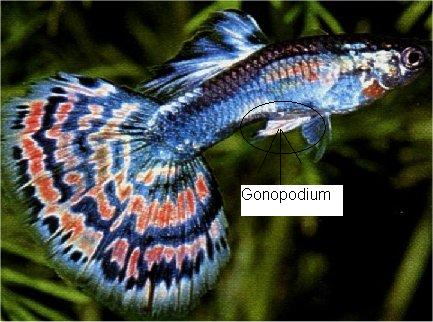 Male or Female ?   FishForums.com