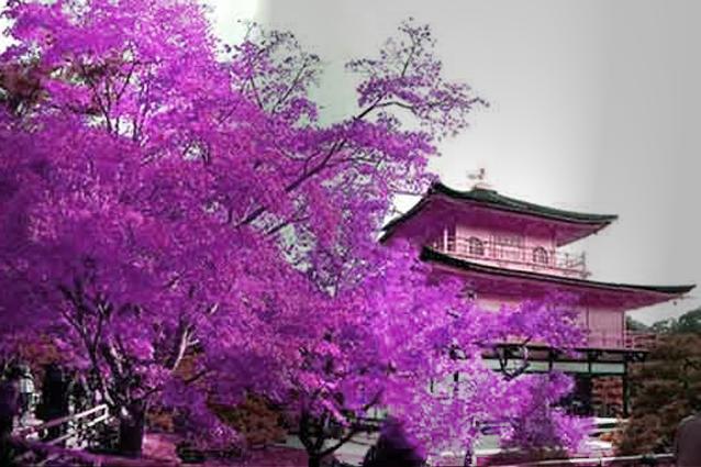 Foto ilustrasi Iklim di negara Jepang
